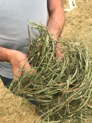 handful of hay